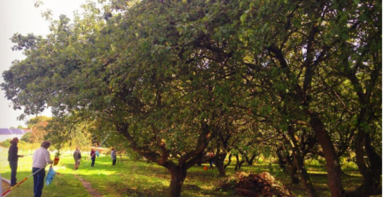 working in the orchard